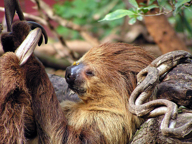 Sloth Facts: Science