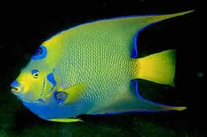 Some fish are beautiful...