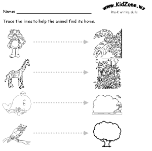 Dynamic Lines Worksheets