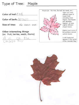 leaf collectors template