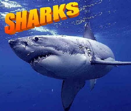 Images Of Sharks Sharks
