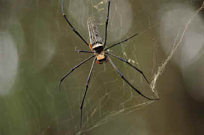 myths surrounding a spider weaving a web If you grew up on charlotte's web, eb white's popular children's novel about  the friendship between a barn spider and a talking pig, then you may be forgiven .