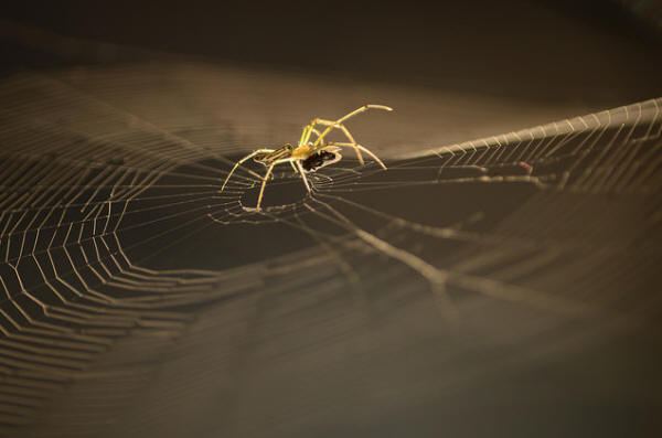 Spider Facts - Surfing the Web
